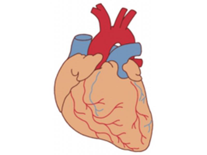 犬と猫の心臓病