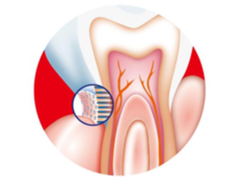 歯科診療について